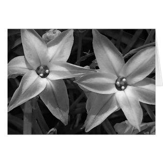Svartvita blommor hälsningskort