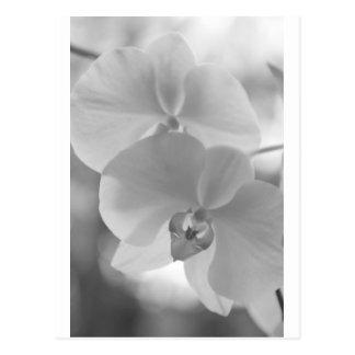 Svartvita Orchids Vykort