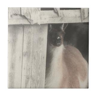 Svartvitt djur för gullig Llama Kakelplatta