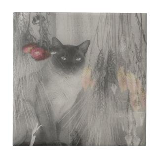 Svartvitt djur för Siamese katt Kakelplatta