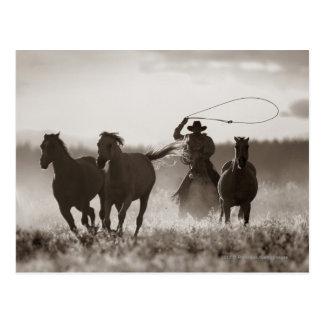 Svartvitt foto av en CowboyLassoing hästar Vykort