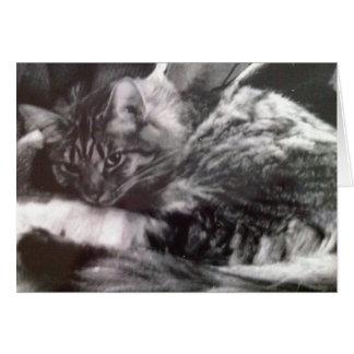 Svartvitt katthälsningkort hälsningskort