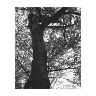 Svartvitt körsbärsrött blommarträdtryck canvastryck