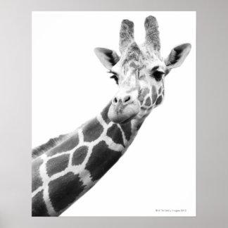 Svartvitt porträtt av en giraff poster