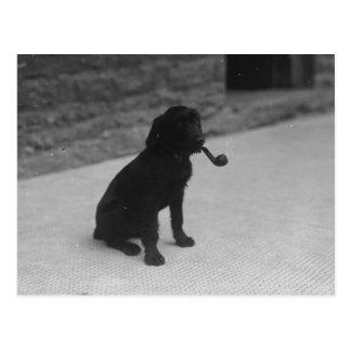Svartvitt röka för fotohund leda i rör vykortet vykort