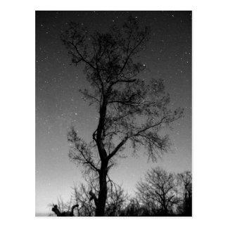 Svartvitt träd på natten vykort