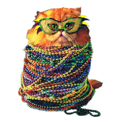 Carnival cat - colorful cat - Funny cats