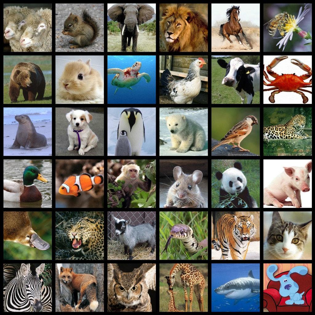 *Animals, Photography,