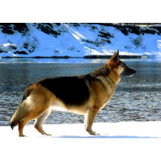 Winter Shepherds