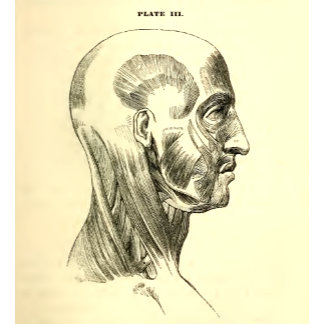 Vintage Anatomy   Muscles of the Head