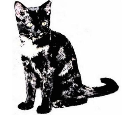Feral Cats
