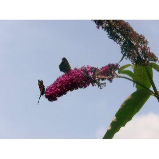 Butterflies and Creatures