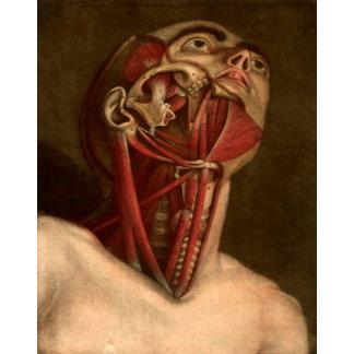 Vintage Anatomy   Head III