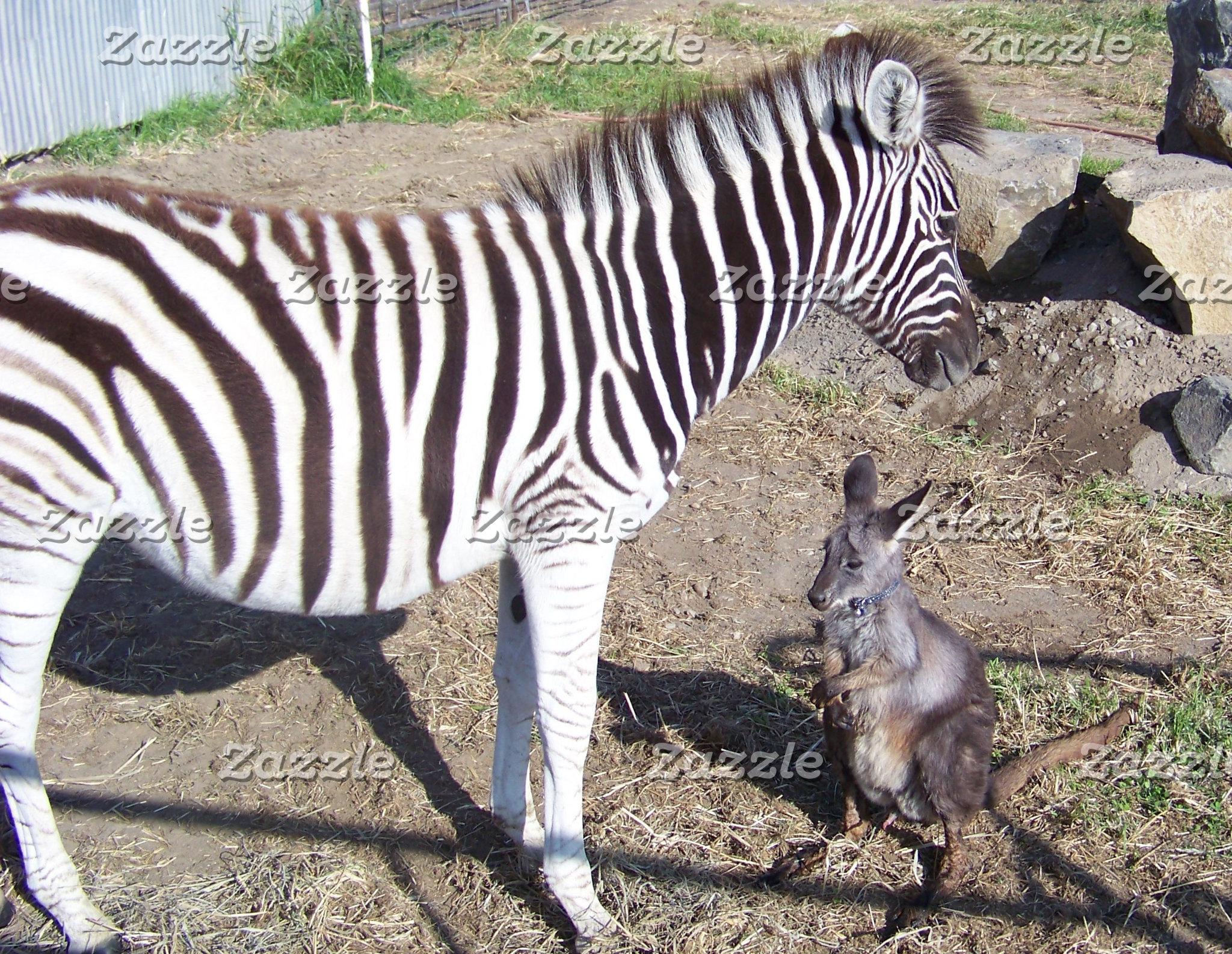 Funny Animal Tees
