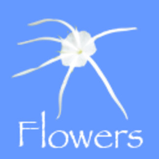 Flowers, Plants & Floral