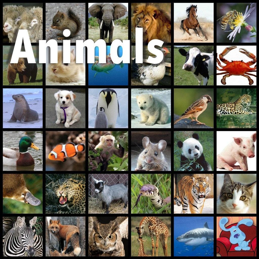 ANIMALS, Cartoons