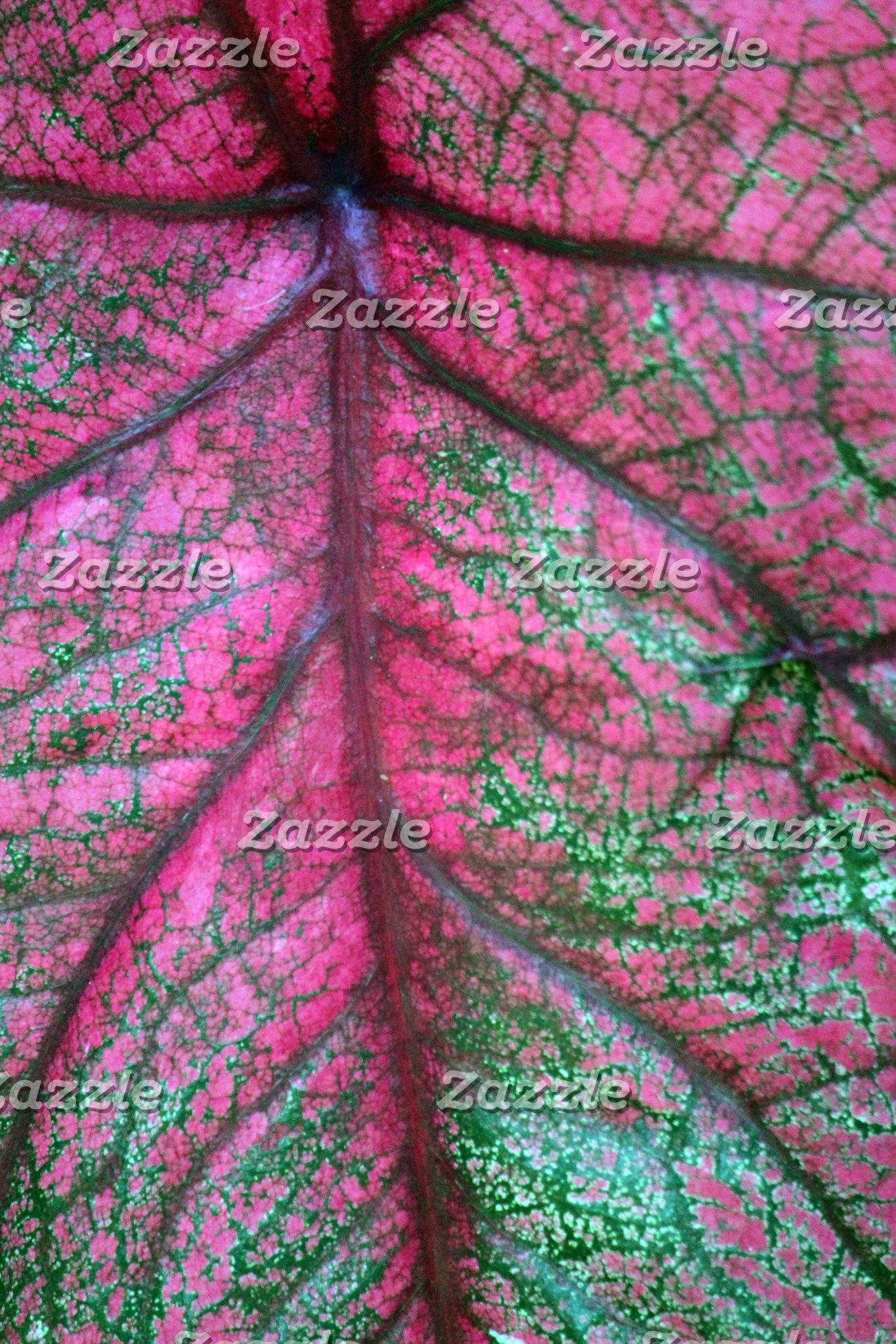 Caladium Leaves