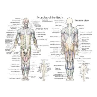 Anatomy Charts