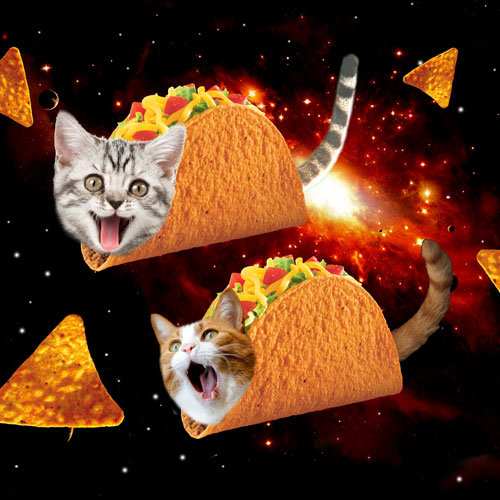 Taco Cats Space