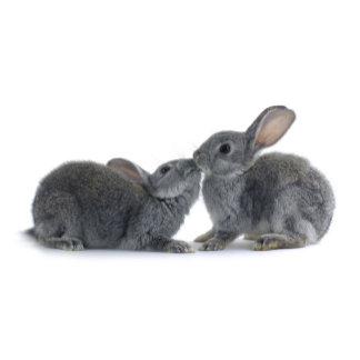 Rabbit Kiss