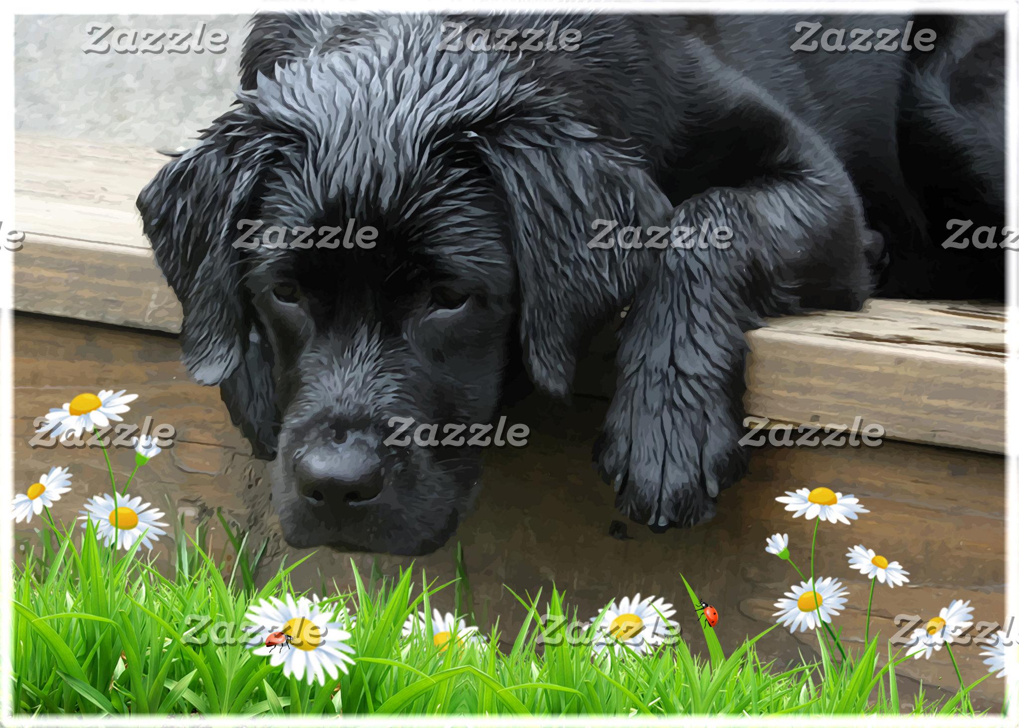 Black Labrador - Appreciate the Little Things