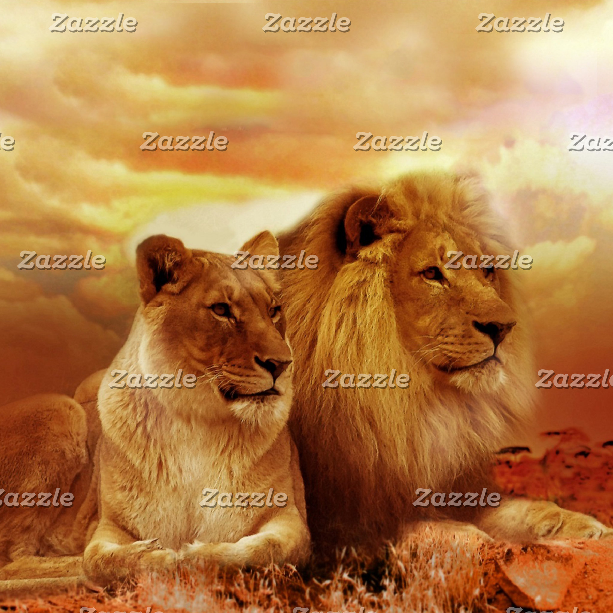 African lions - safari - wildlife
