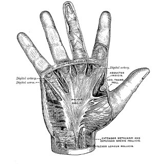 Vintage Anatomy Palm of the Hand