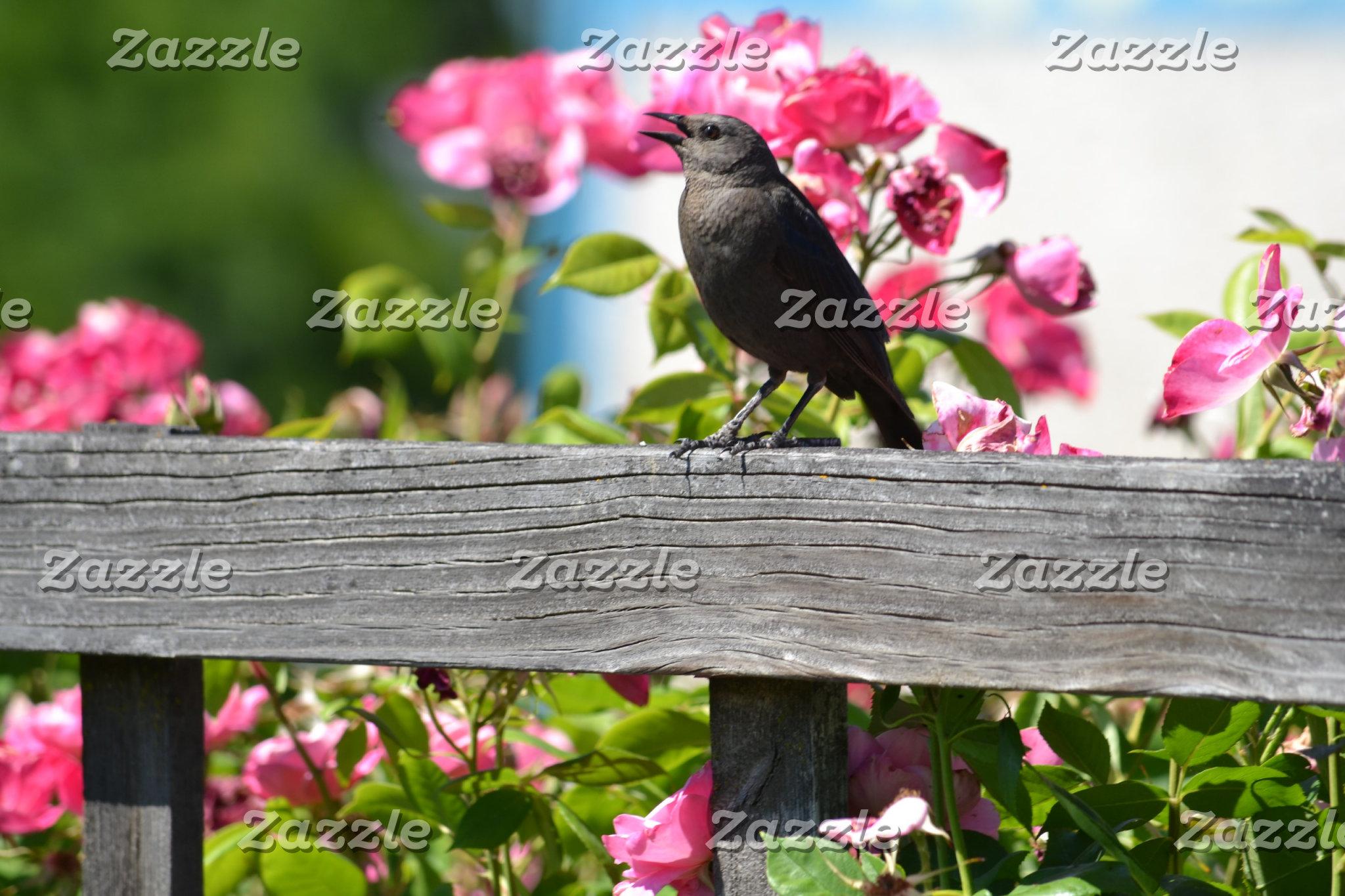 Birds (photography)