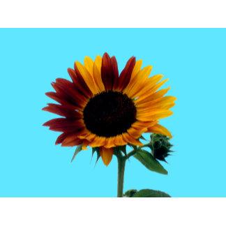 Sunflower Greetings