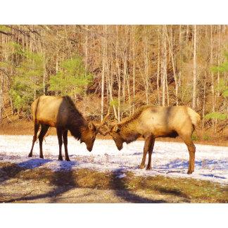 2 elk in snow