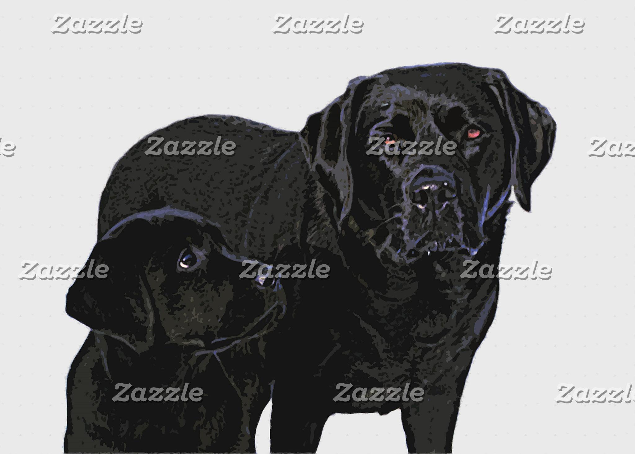 Black Labrador - Admiration in Puppy's Eye's