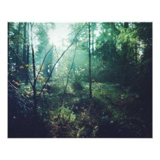 Svensk skogen fototryck