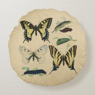 Swallowtail fjärilar, Caterpillars och mal Rund Kudde
