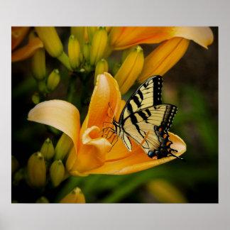 Swallowtail för gammal värld fjäril poster