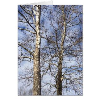 Sycamoreträd i en vinterhimmel --- hälsningskort