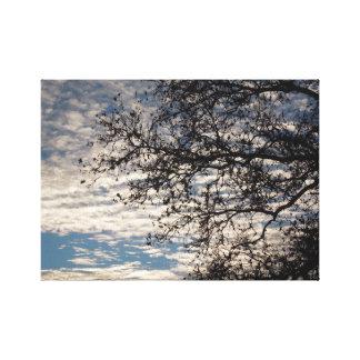 Sycamoreträd i molnig himmel nära Sundown i vinter Canvastryck