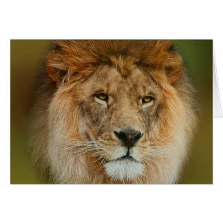 Sydafrika majestätiskt lejont slut upp hälsningskort