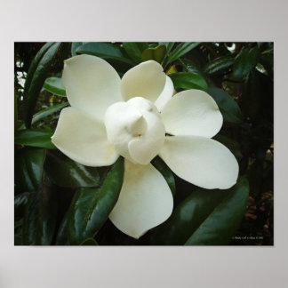 Sydlig Magnolia Poster