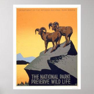 Syltvilda djur 1939 WPA Posters