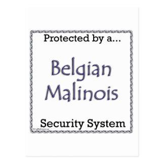 System för belgareMalinois säkerhet Vykort