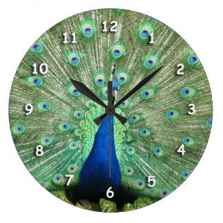Ta tid på - påfågeltailfeathers stor klocka