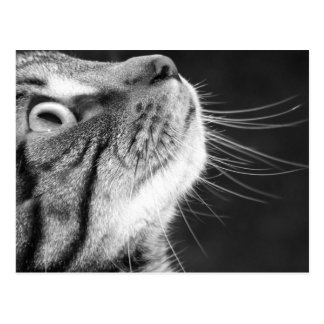 Tabby katt i svartvit vykort