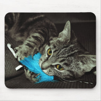 Tabby katt med fjädern av Shirley Taylor Musmatta