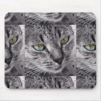 Tabby katt med grönt synar mousepad musmatta