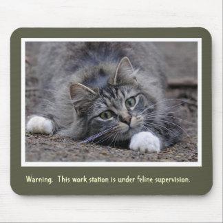 Tabby katt som håller klockan musmatta