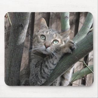 Tabby katt som klättrar ett träd musmatta