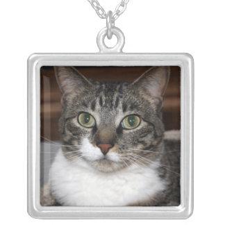 Tabby katt som tittar dig fotohalsband silverpläterat halsband