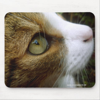 Tabby katt tätt upp Mousepad Musmatta