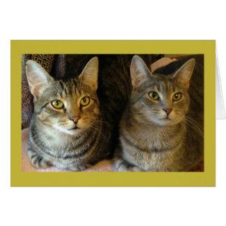 Tabby kattgrattis på födelsedagenkort från båda av OBS kort