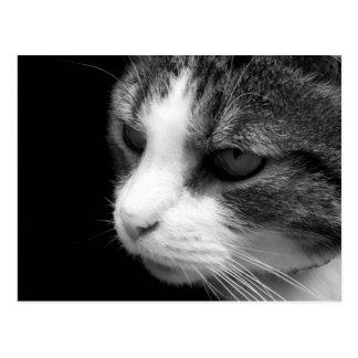 Tabby kattsvart & vitporträtt - djur vykort